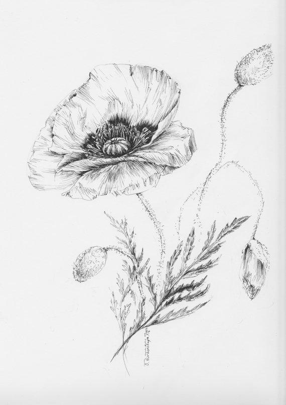 Drawn poppy ballpoint pen Flower by pen drawing Poppy