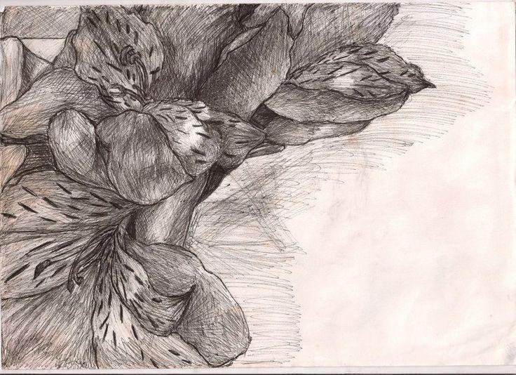 Drawn poppy ballpoint pen Art about Poppies biro images
