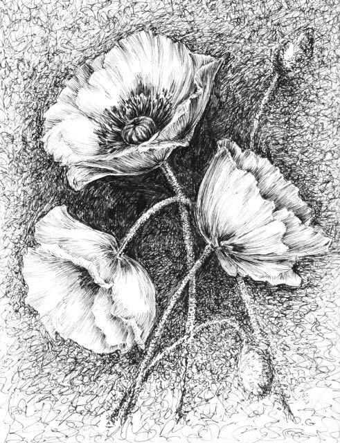 Drawn poppy ballpoint pen KrazyKatLady2015 drawings original Poppy flower