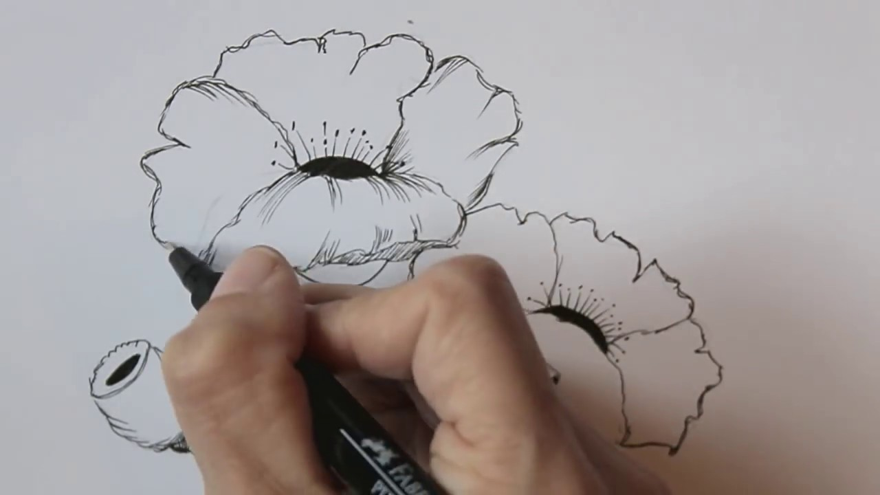Drawn poppy beginner  beginners easy Unsubscribe from