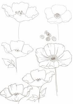 Drawn poppy big flower Himalayan print: Bobbie  painting