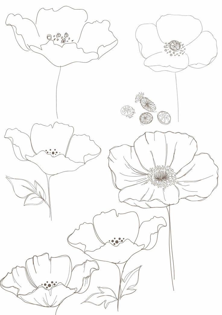 Drawn poppy big flower Print: Bobbie images on drawings