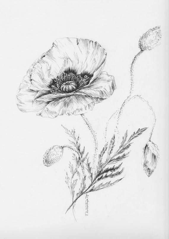 Drawn poppy black and white And prints Black botanical ideas