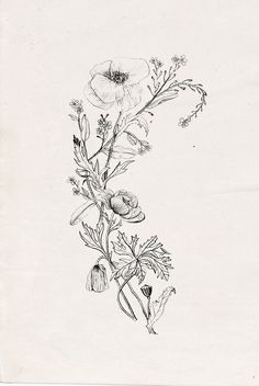 Drawn poppy black and white Botanical black tattoos ideas flower