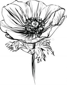 Drawn poppy black and white Picture floral black 10747492 Poppy