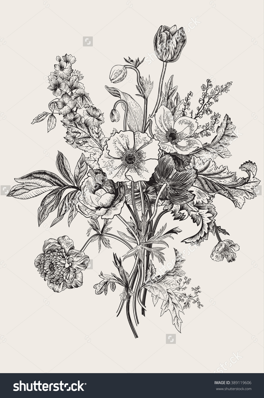 Drawn poppy black and white Flowers lilies Victorian drawing of