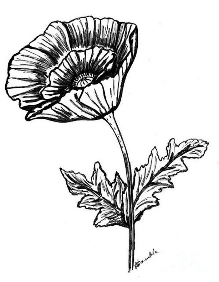 Drawn poppy black and white Poppy  Download Black Black