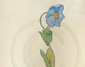 Drawn poppy blue poppy Grandis Blue blue Poppy 1920s