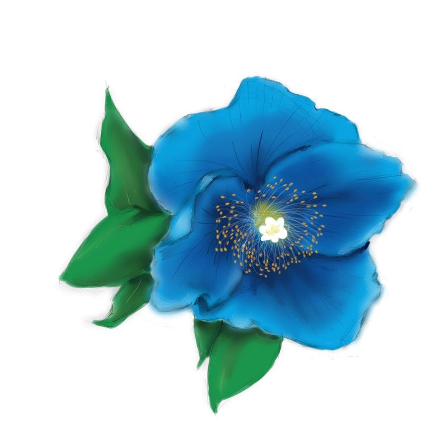 Drawn poppy blue poppy By Tattoo Poppy on Design
