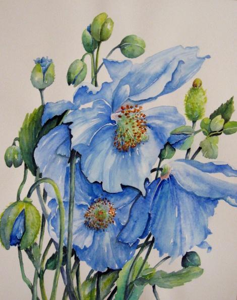 Drawn poppy blue poppy Blue Himalayan Art: Blue Jackie