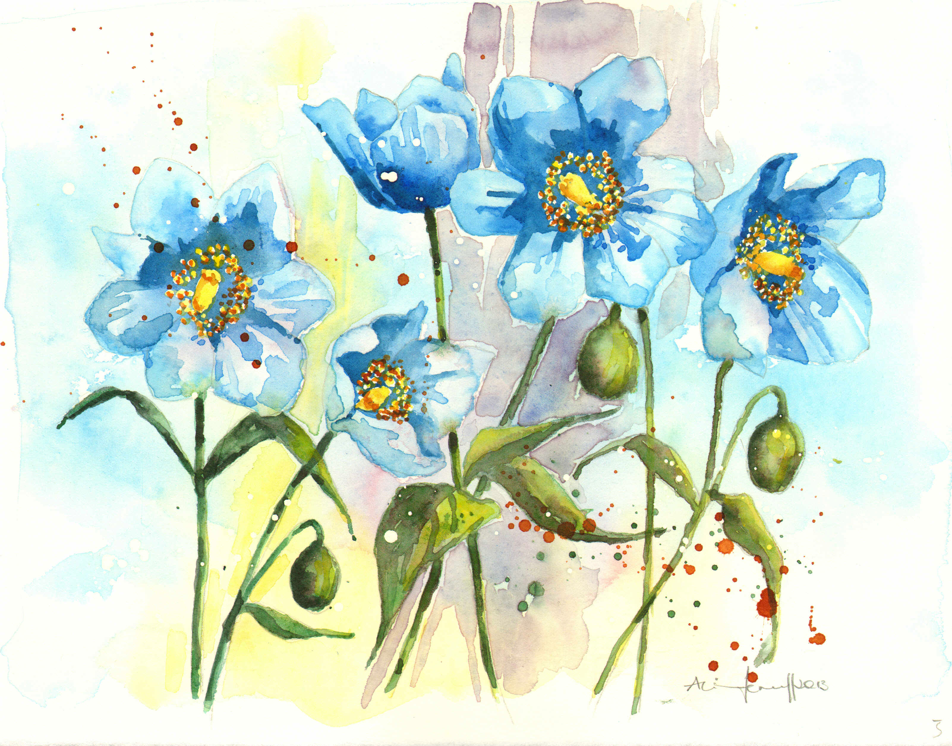 Drawn poppy blue poppy Get watercolour This paper! the