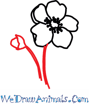 Drawn poppy california state A Flower Draw to Tutorial