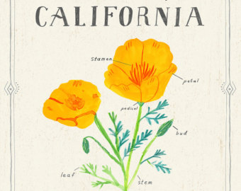 Drawn poppy california state Golden Etsy California The Print