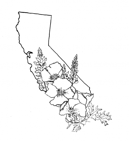 Drawn poppy california state Where husband  some Put