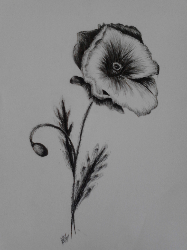 Drawn poppy charcoal Drawing Drawing Drawing Charcoal Oct