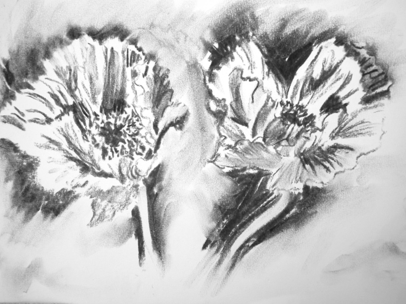 Drawn poppy charcoal The charcoal Popping Watercolour!: for