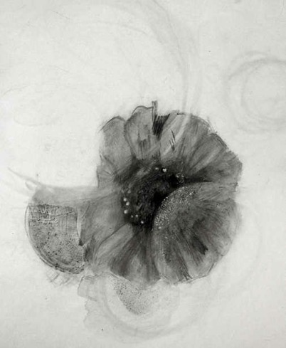 Drawn poppy charcoal  paintings by of Charcoal