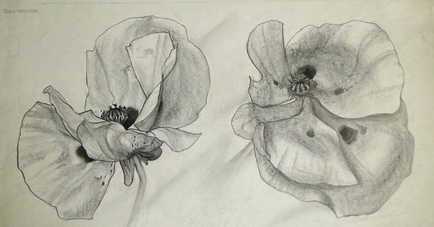 Drawn poppy charcoal Thayer Charcoal  extract paintings