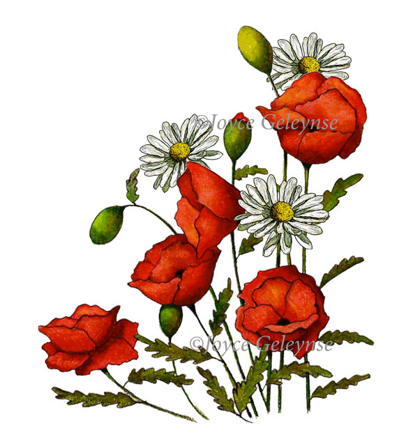 Drawn poppy clip art ToadstoolPrintables Clipart Clipart Drawn Poppies