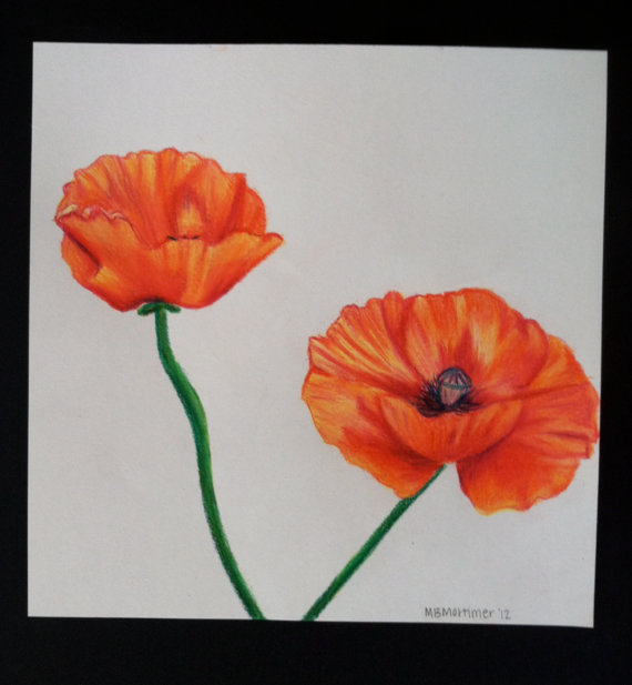 Drawn poppy colored pencil Etsy retrorigamarole Etsy Colored Poppy