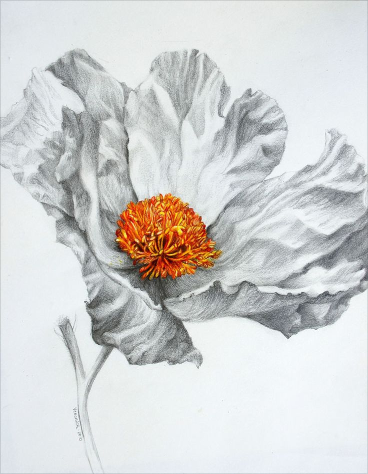 Drawn poppy colored pencil Best Colored images Pinterest Winters