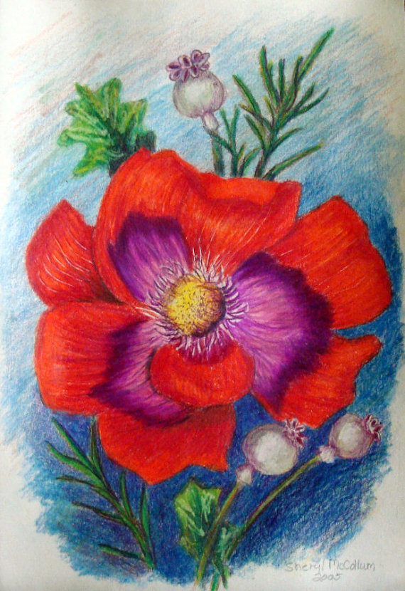 Drawn poppy colored pencil Card 6 9 SLMGallery 00