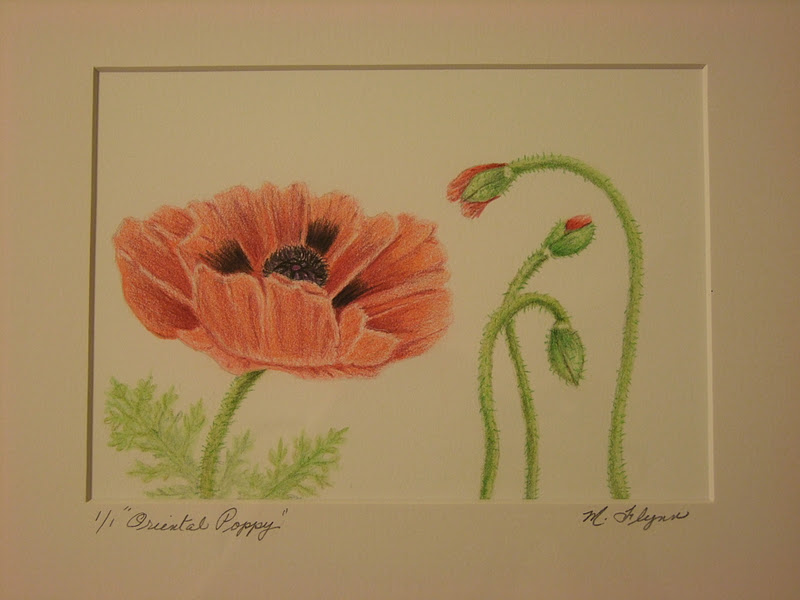 Drawn poppy colored pencil Of poor of settings photos