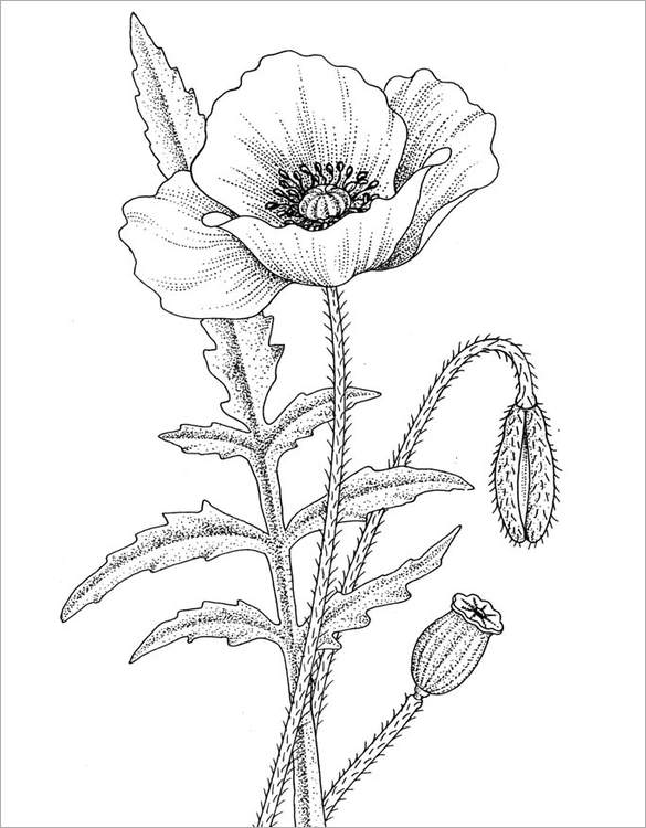 Drawn poppy coloring Poppy Free You Printable Colouring