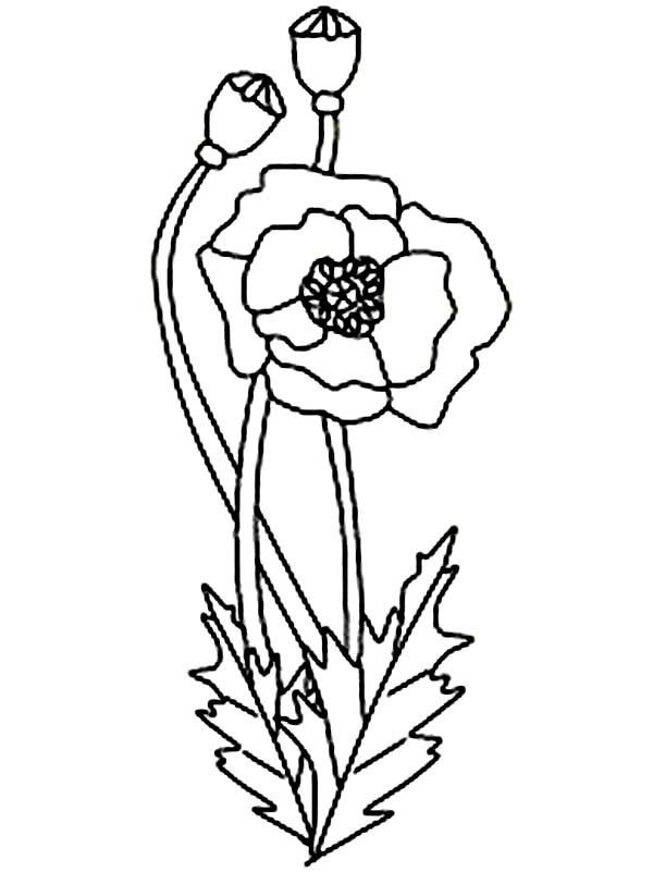 Drawn poppy coloring #29 Printable 42 coloring 29