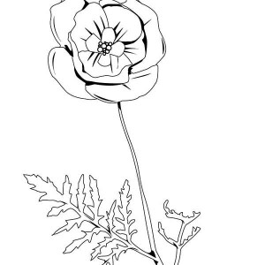 Drawn poppy coloring Lovely Coloring Coloring Page of