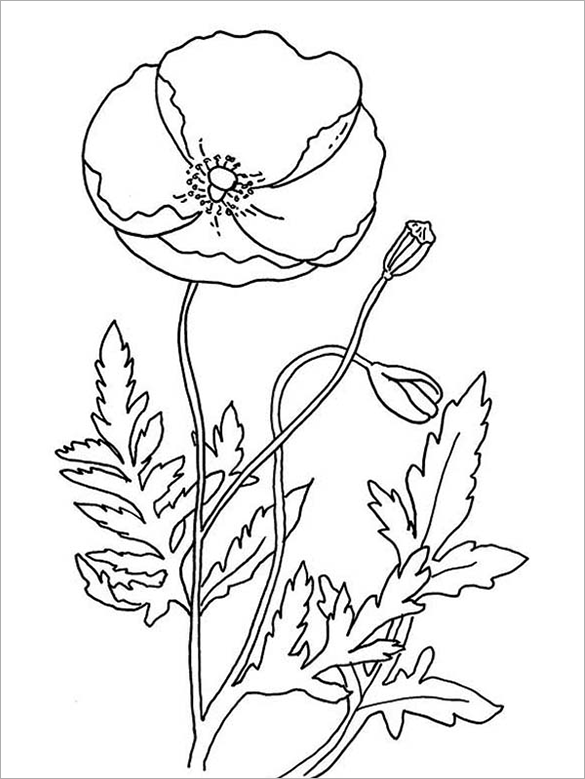 Drawn poppy coloring Properly page be poppy colour