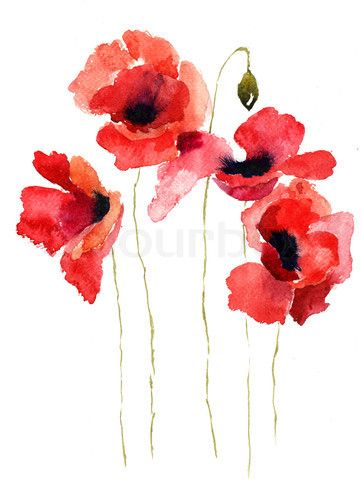 Drawn poppy colourful Best I colours Poppy drawing