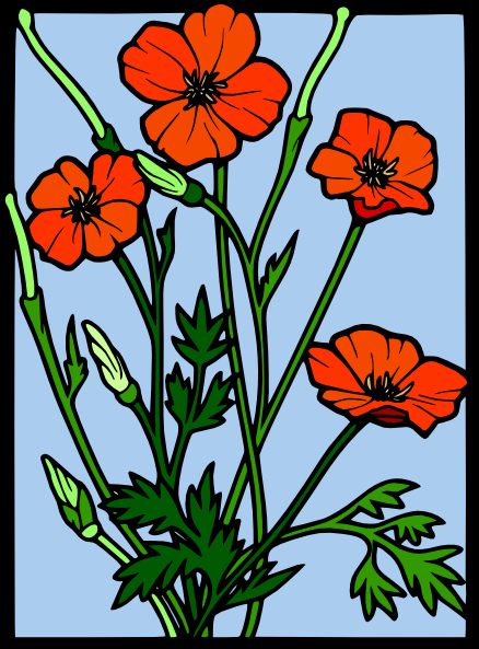 Drawn poppy colourful  Clker Drawing art On