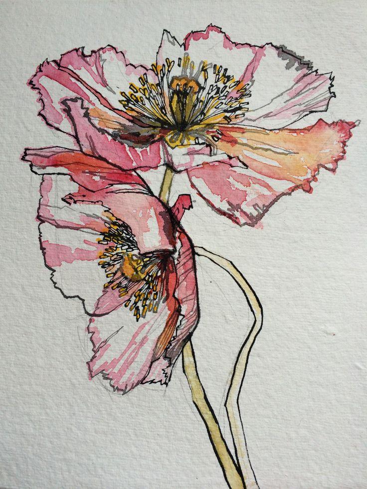 Drawn poppy colourful Pinterest Best 25+ ideas drawing