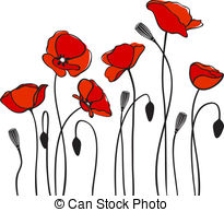 Drawn poppy detailed Poppy red poppies Images photography