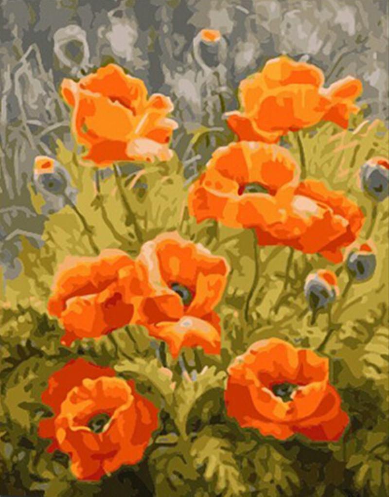 Drawn poppy different flower Kit Flower Oil Kit Painting