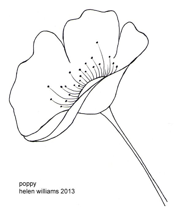 Drawn poppy easy More this images 110 on