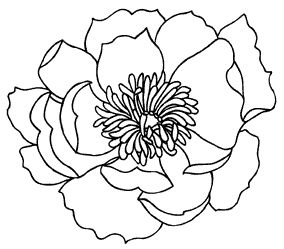 Drawn poppy easy 25+ stamps Flower great outline
