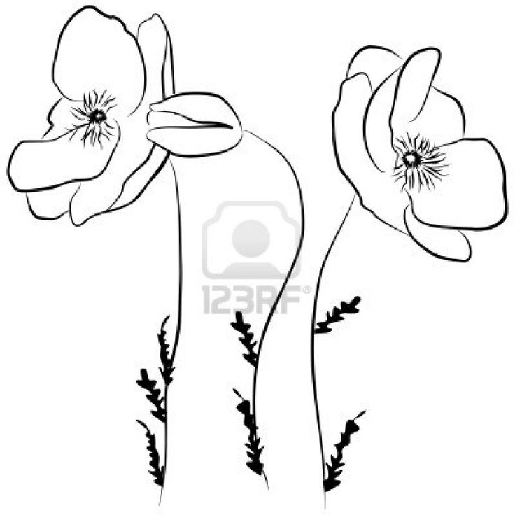 Drawn poppy flamboyant flower Poppy simple Google drawing/pattern line