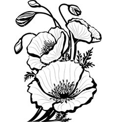 Drawn poppy flamboyant flower Poppy vector by to How