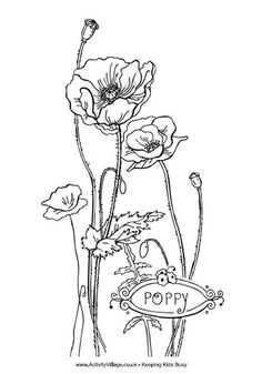 Drawn poppy flamboyant flower Page poppy shape coloring …