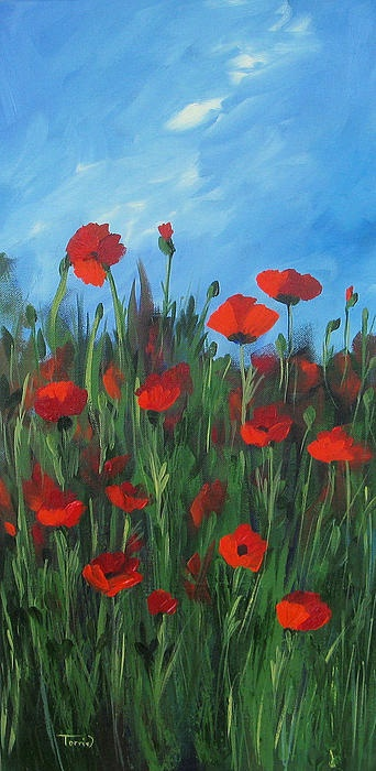 Drawn poppy flanders field Images on Field about flanders