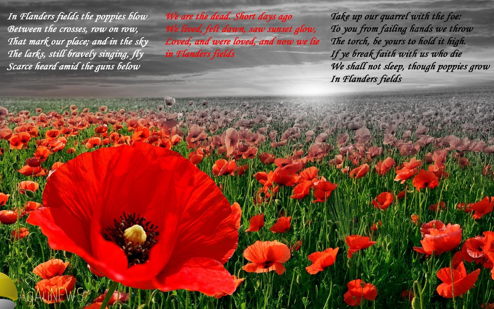 Drawn poppy flanders field THE PAIR POEM FLANDERS COINS