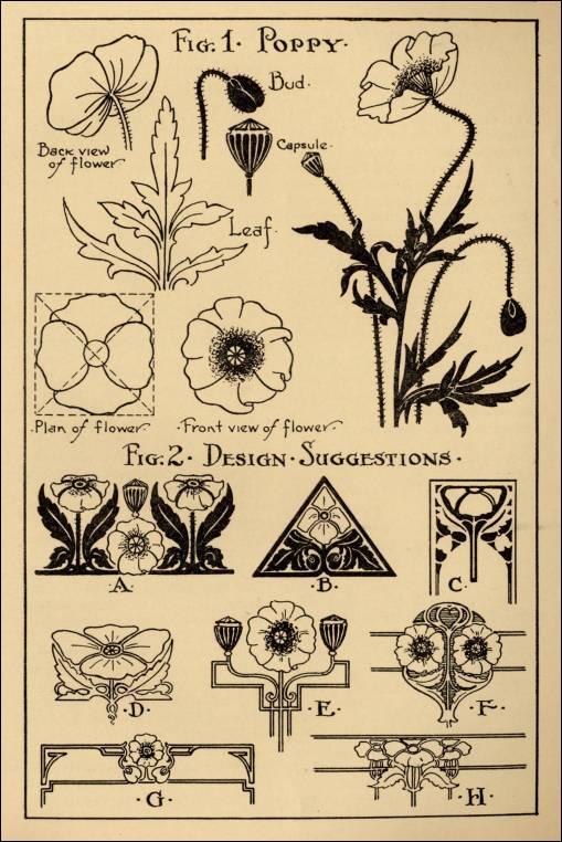 Drawn poppy flower leaf California Gallery California For