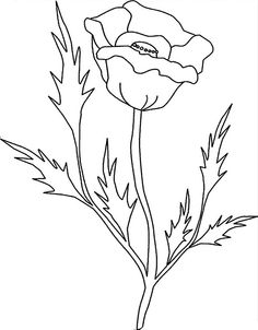 Drawn poppy flower leaf FlowersColouringColoring · Pointy things California