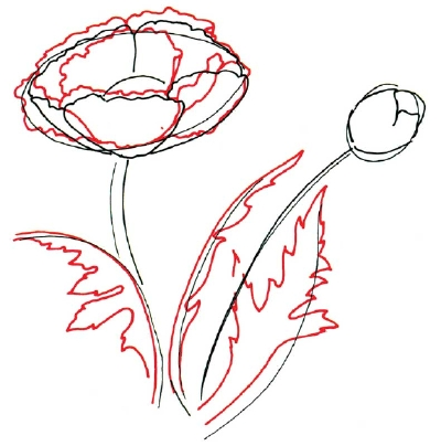 Drawn poppy flower leaf Leaves to Petals Leaves Poppy