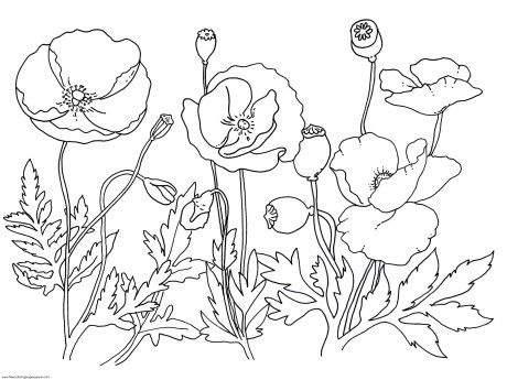 Drawn poppy flower leaves Search Search r leaves Google