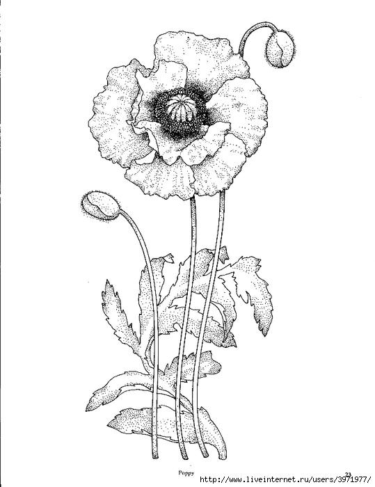 Drawn poppy glass Pinterest Lindsay Kenison on Pin