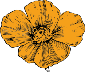 Drawn poppy golden poppy Poppy California Golden Art vector