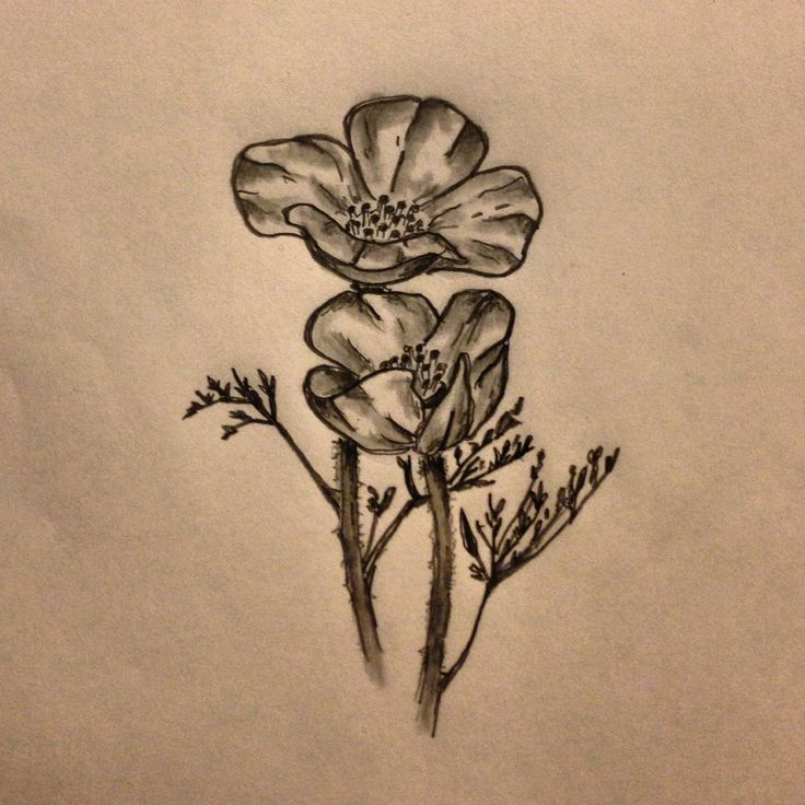 Drawn poppy golden poppy By tattoo sketch 21 ideas